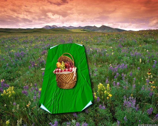 prairie-flowers_near-east-glacier-park_montana