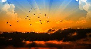 assemblage  ciel